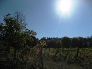 l'amore tra le vigne 7