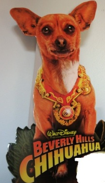 Hi Chihuahua :-)