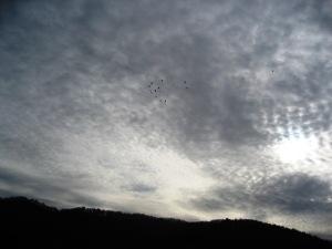 Nuvole su Altacollina