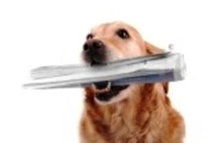5788960-cane-con-il-giornale