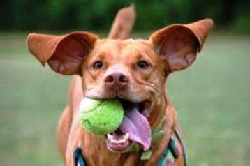 cane gioco