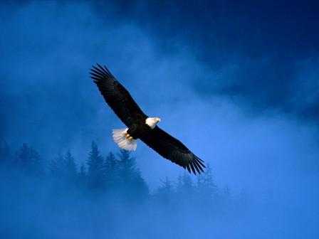 BIRD066