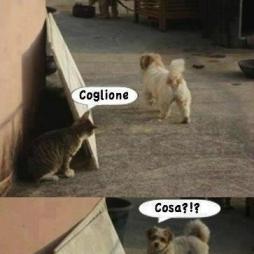 Gatto cane coglione