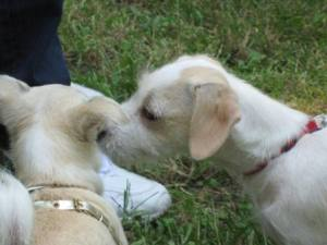 simpatici cagnolini