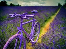 La bicicletta è su in cascina