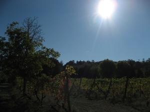 Il sole impallidisce
