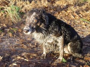 dirty-dog-1385167