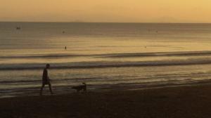 Cane che gioca col compagno umano