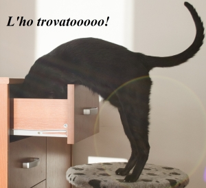 cat_head_in_the_drawer.jpg